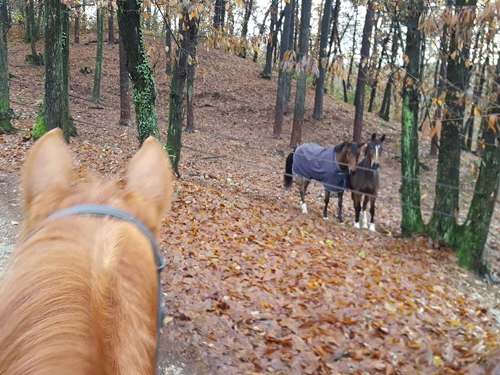 Horse Life…  #lucamariamoneta  #ethology  #nature  #ourstable  #winter