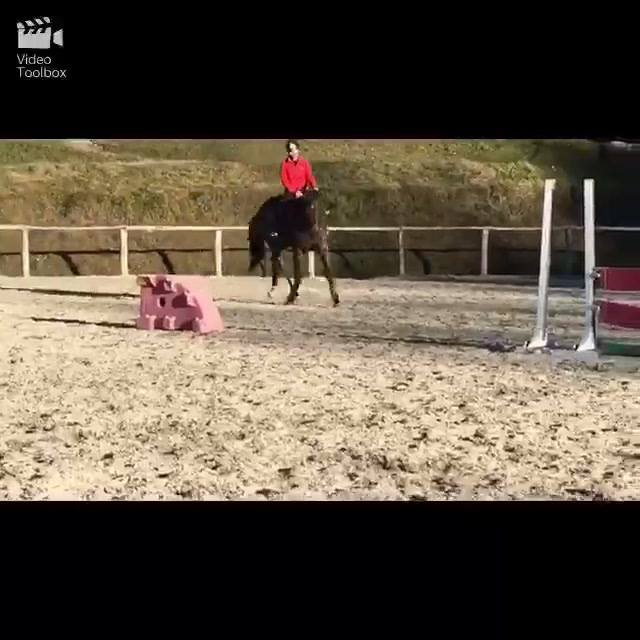 Eleonora and Enette's morning trainining.   #ethology  #horsemanship  #lucamaria…