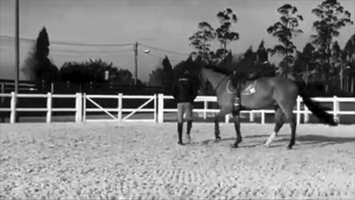 Three words to describe  #lucamonetahorsemanship approach: feeling, respect and …